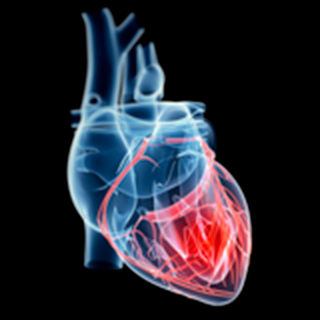 UCSF-Heart-Failure-and-Pulmonary-Hypertension-Research-2x